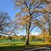 "<p><a href=""https://www.flickr.com/people/tonyworrall/"">Tony Worrall</a> posted a photo:</p>  <p><a href=""https://www.flickr.com/photos/tonyworrall/50528899332/"" title=""Autumn trees at Ashton Park, Preston""><img src=""https://live.staticflickr.com/65535/50528899332_c977b812da_m.jpg"" width=""240"" height=""132"" alt=""Autumn trees at Ashton Park, Preston"" /></a></p>"