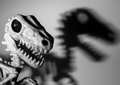 Vinny velociraptor skeleton shadow cu