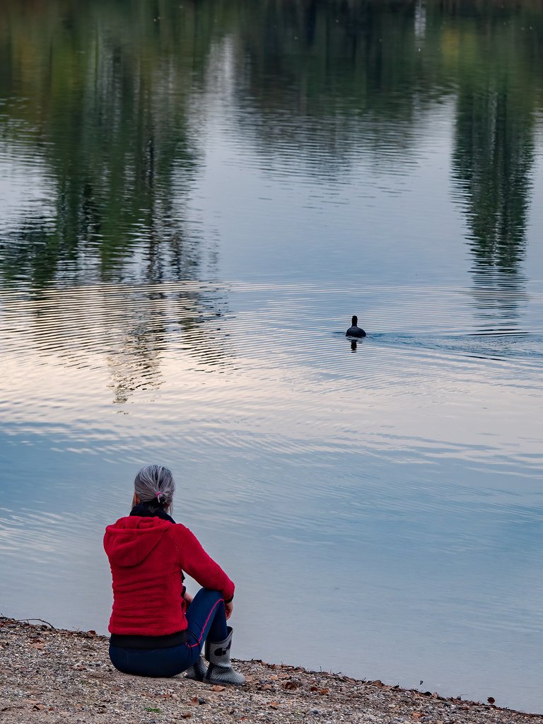 Au bord de l'étang... + nouveau cadrage... 50528934728_6277786b7d_b