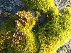 Moss in October light