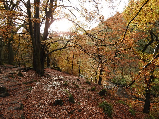 Autumn at Hardcastle Crags, Hebden Bridge, Yorkshire, England