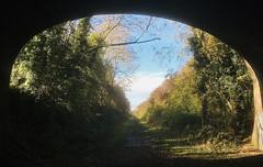 Autumn light on the old line