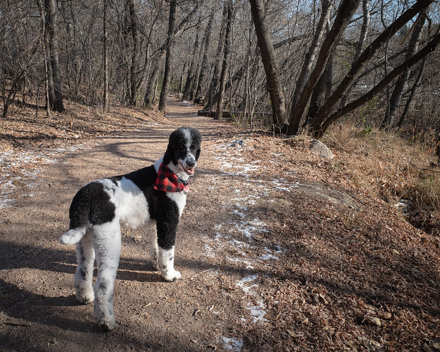 Trekking the trails with Timber