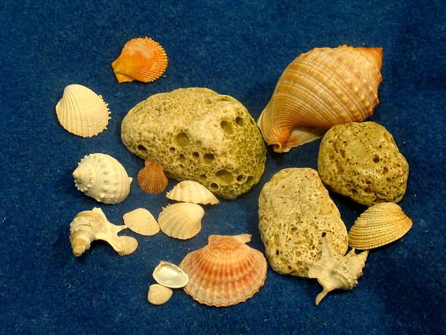 Sea stone and shells
