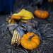 Season of Fall