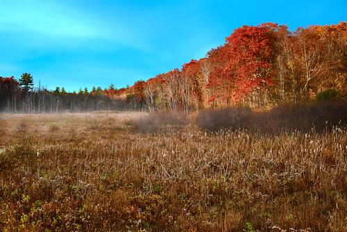sunrise morning swamp foliage trees meadow fog mist early massachusetts fall autumn october nikon d810 nikond810 landscape nikkor outdoors nature