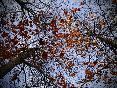 Backyard Fall Colour
