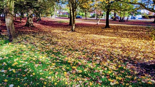 Autumn leaves at Ashton Park | by Tony Worrall