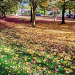 Autumn leaves at Ashton Park