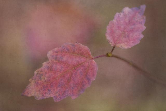 autumn's vibes