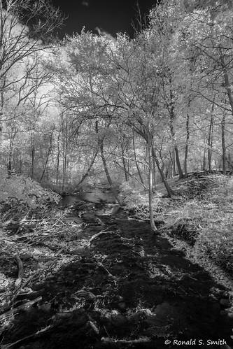 fujixe1 fujixf1428 infrared landscape blackandwhite monochrome