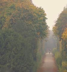 afternoon walk  (由  clifflef