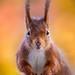 Colorfull Squirrel