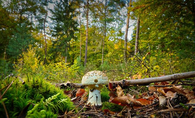 Ein Pilzleben