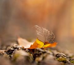 Autumn, your bones are showing.  (由  marianna armata