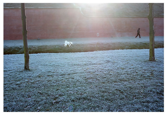 2020,10,22_ The ground frost