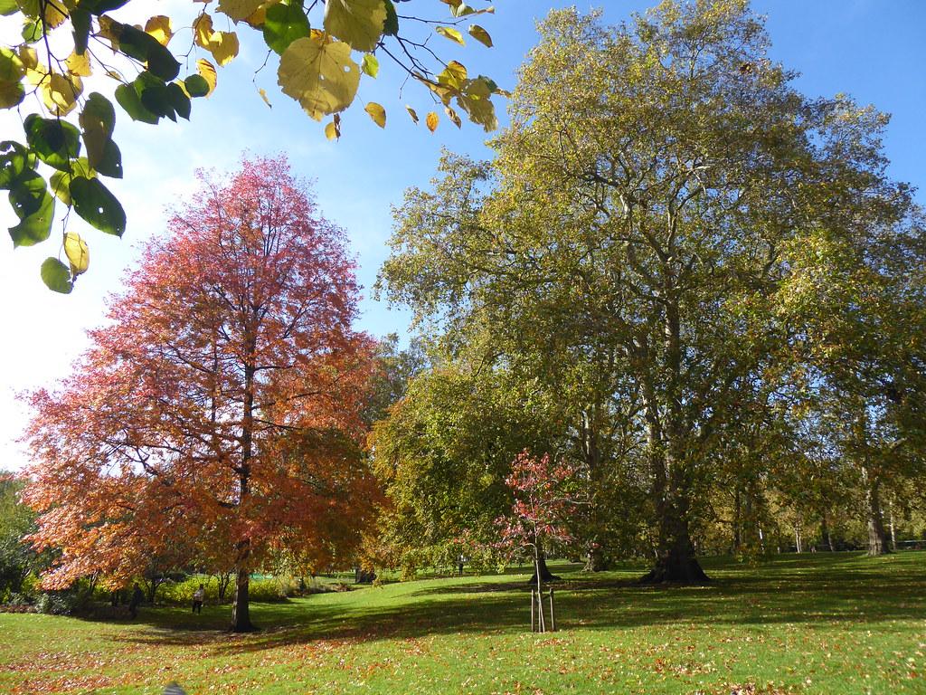 Autumn Trees, StJames's Park, London