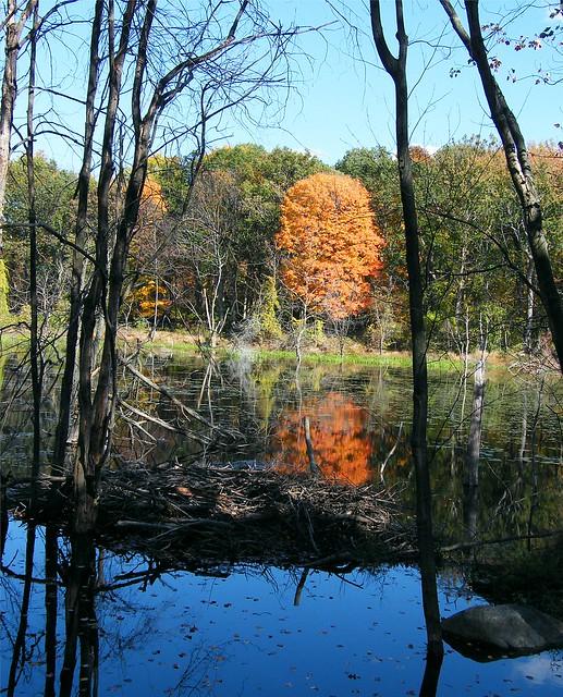 Orange Autumn Tree