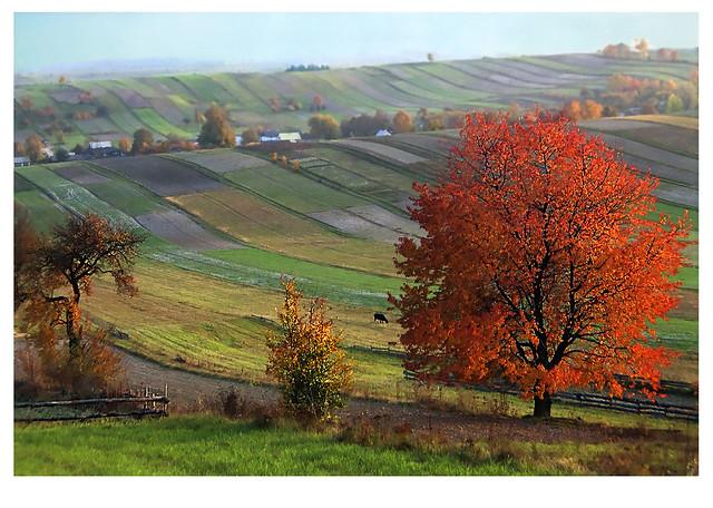 2020,10,21_Autumn in Roztocze