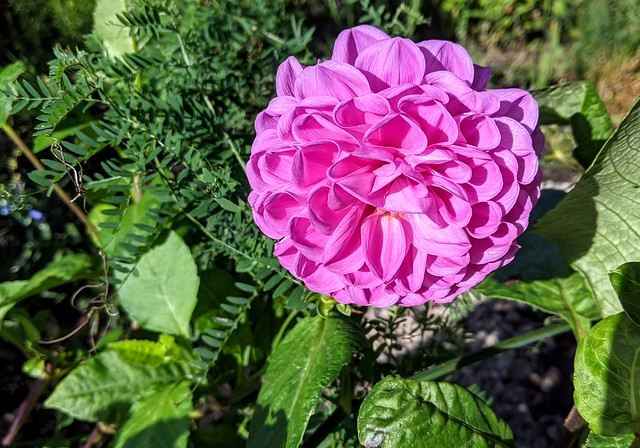 Flower at Ashton Park Lets Grow gardens