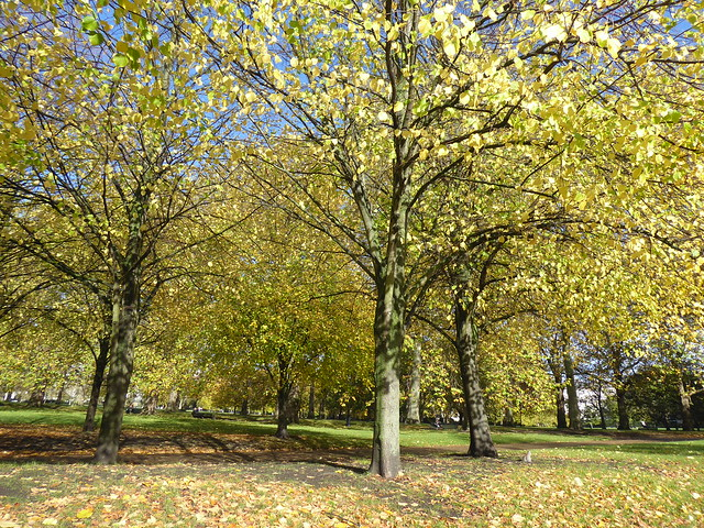 Autumn Foliage, Green Park, London