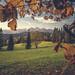 "<p><a href=""https://www.flickr.com/people/kubaszymik/"">kubaszymik</a> posted a photo:</p>  <p><a href=""https://www.flickr.com/photos/kubaszymik/50532003777/"" title=""Autumn in Tatras""><img src=""https://live.staticflickr.com/65535/50532003777_bb096b4532_m.jpg"" width=""192"" height=""240"" alt=""Autumn in Tatras"" /></a></p>  <p>View from Łapszanka Pass</p>"