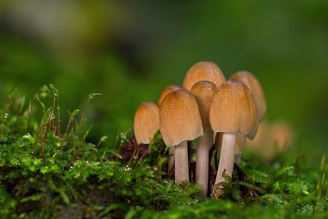 Orman Mantarları(Forest Mushrooms)