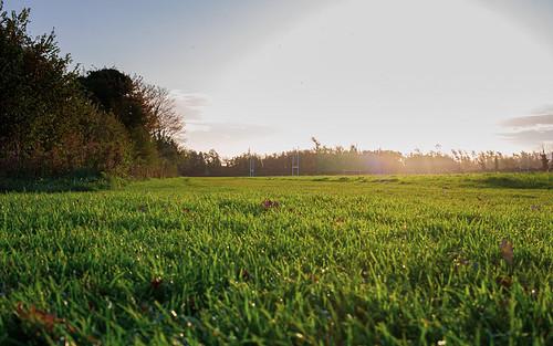 grass sun field sunrise park outside morning ireland