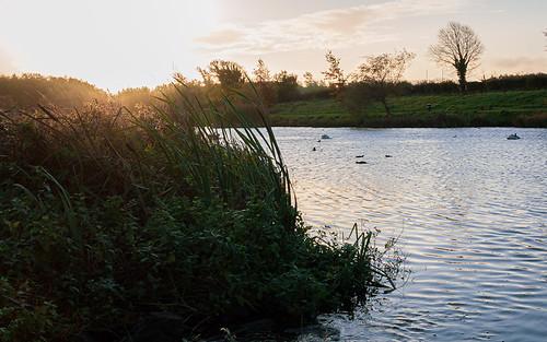 tallaght tymon pond water 60d morning autumn park field sunrise
