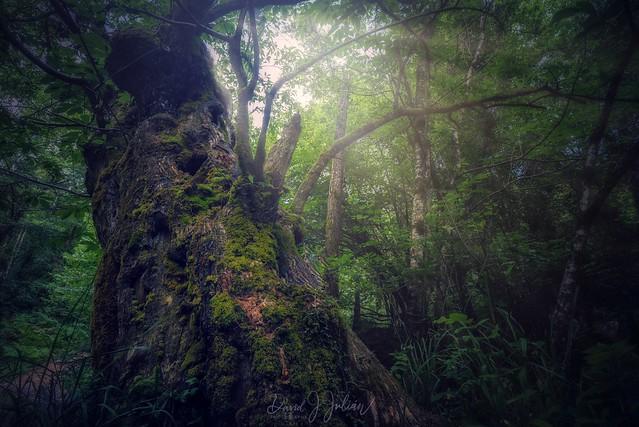 Asturias' Forests (Explored)