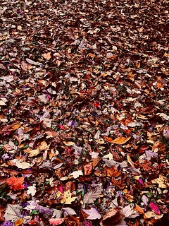 MOTHER NATURE'S CARPET