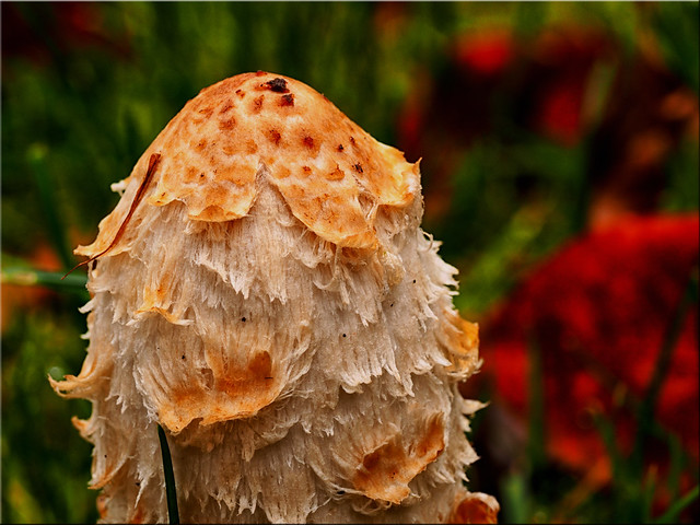Autumn mushroom