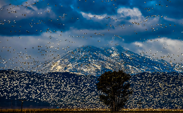 Bird Migration on highway 5 in California