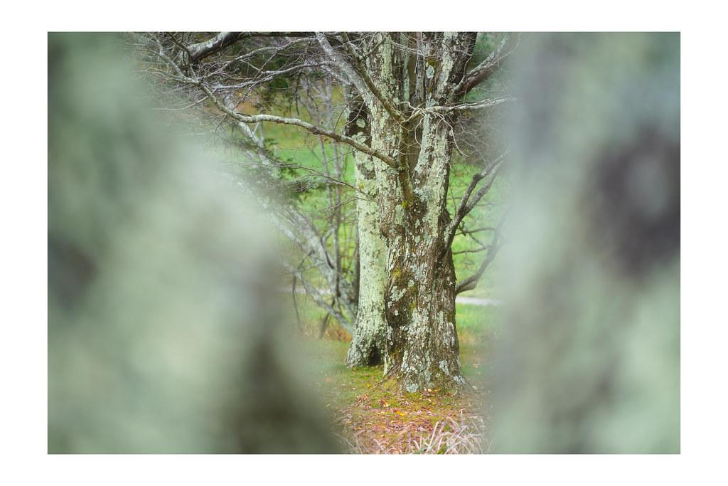 A tree through trees