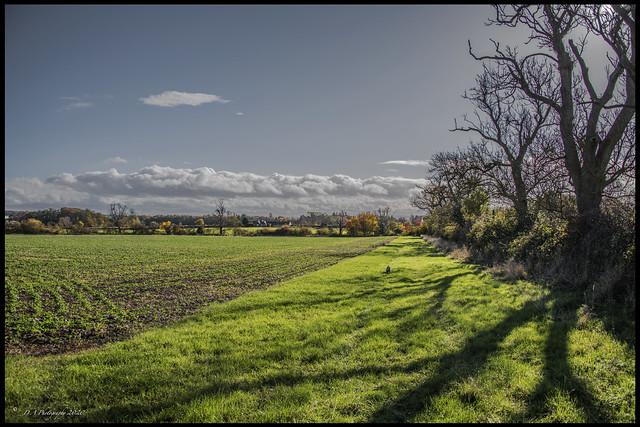 Landscape DSC_0066