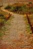 El camí que ens porta...