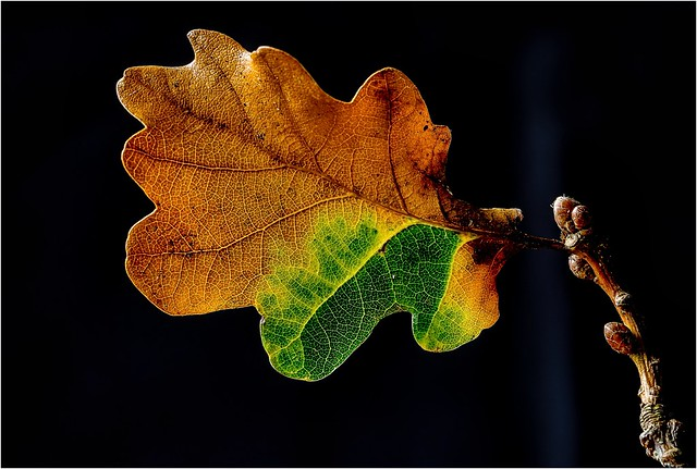 Changing colours ..............