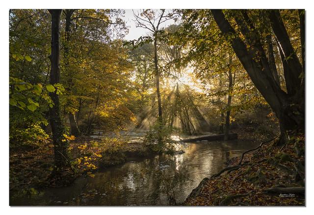 Woodland morning