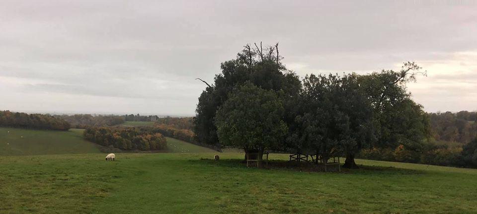 Arundel Park Arundel to Amberley (backwards)