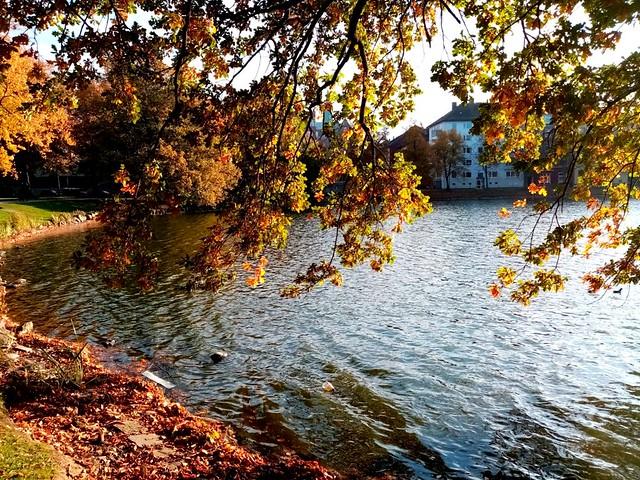 bunte Herbstblätter am Kleinen Kiel im Oktober