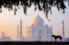 The Taj Mahal Morning
