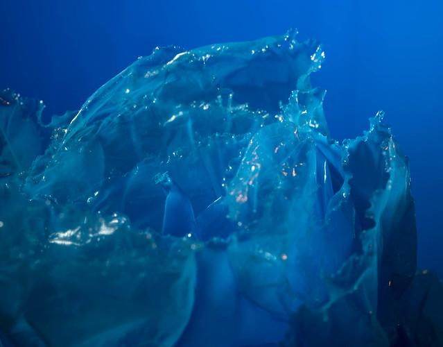 Blue Bubble Burst