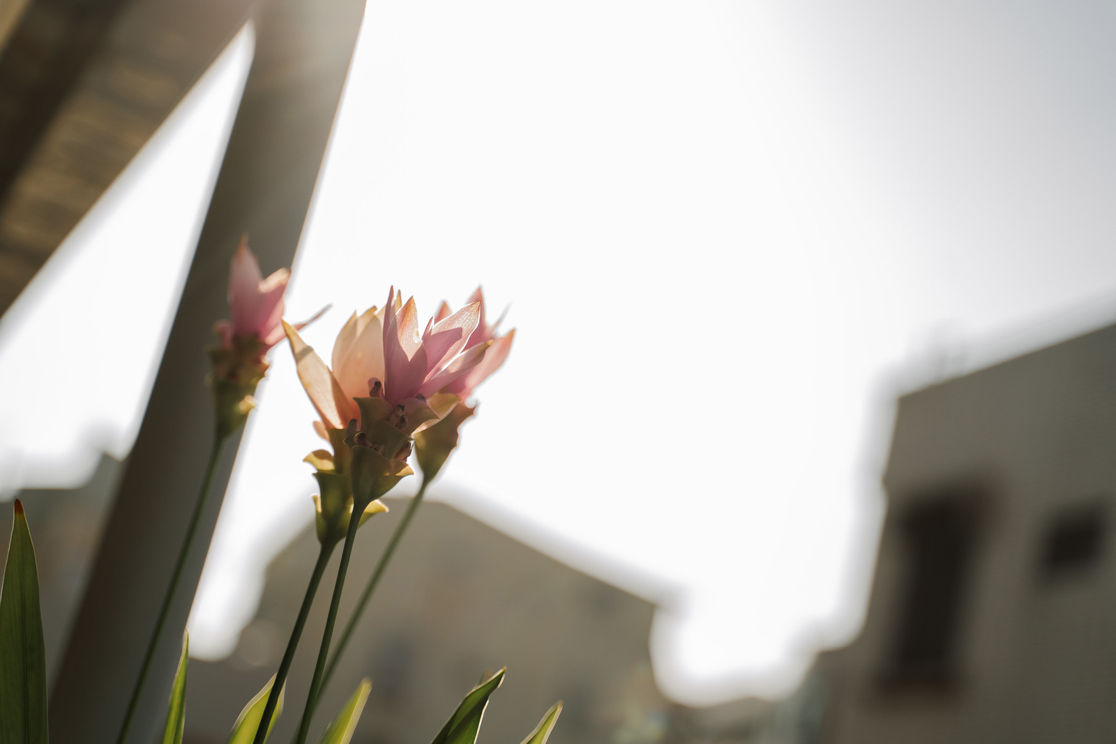 photo-004