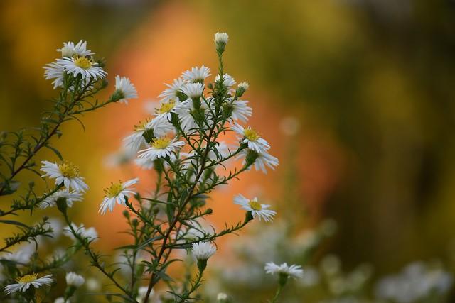 'Autumn joy...' 2