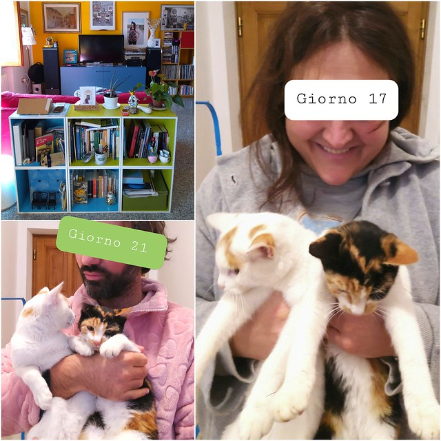 Covid diaries  - Day 21 / Day 17 - My coronavirus swab result is positive again, my wife's negative. Fortunately, I have many books at home ... and some cats.