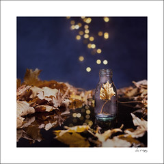 Capturing the Spirit of Autumn