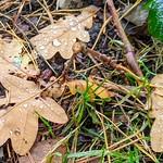 Damp Autumn leaves