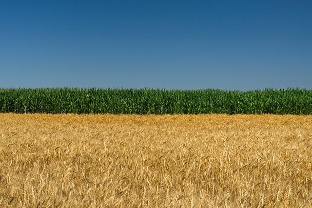 Fields 1346 A