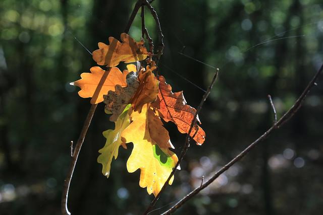 Couleurs d'automne // Autumn colors