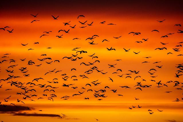 Landeanflug im Sonnenuntergang / Landing approach in the sunset
